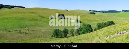 Hügelige Landschaft der Felder, Aubrac Plateau, Cantal, Region Auvergne Rhone Alpes, Frankreich, Europa