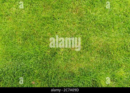 Rasen für ein Training Fußballplatz, Golfplätze Rasen Muster strukturiert.
