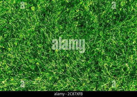 Frisches Rasengras. Gras Golfplätze grün Rasen Muster Textur. Grünes Gras Textur Hintergrund. Blick von oben auf Gras im Garten. Rasen Hintergrund Textur.
