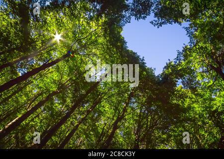 Das Vordach dieses Waldes hat ein Herz-förmiges Loch, das den blauen Himmel zeigt