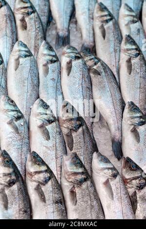 Frischer Meeresbass, Dicentrarchus labrax, auf einem Marktstand für Fischhändler in Großbritannien zu sehen - Stockfoto