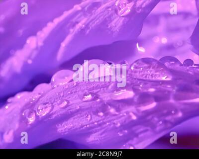 Brillante Wassertropfen auf einer Sonnenblume - Stockfoto