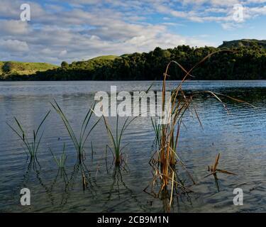 Schilf fängt die Nachmittagssonne an den Kaihoka Lakes, Golden Bay, Neuseeland
