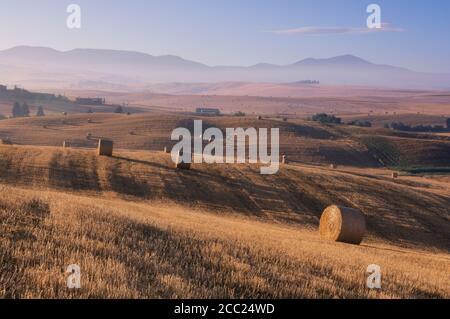 Italien, Toskana, Strohballen auf abgeernteten Maisfeldern - Stockfoto