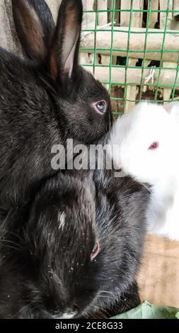 Eine vertikale Aufnahme einer Gruppe von Kaninchen, die sich anschmiegt In einem Käfig - Stockfoto