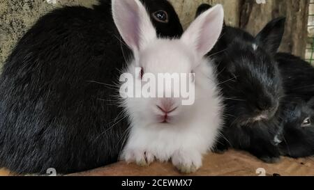 Eine Gruppe von Kaninchen schmiegte sich in einen Käfig - Stockfoto