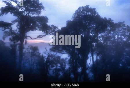 Bäume wurden vor Sonnenaufgang und Sonnenuntergang über dem tropischen Regenwald, Borneo, Malaysia, silhouettiert.