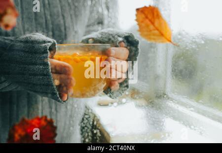 Hände in warmen grauen Pullover halten Tasse heißen Sanddorn gesunden Tee mit Beeren durch nasses regnerisches Fenster mit Herbstblättern, selektive Fokus, Abstrae - Stockfoto