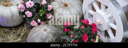 Erntefest, Kürbisse liegen auf dem Heu. Natur Gemüse Lebensmittel Landwirtschaft Erntezeit. Thanksgiving, Halloween und Herbstferien Konzept