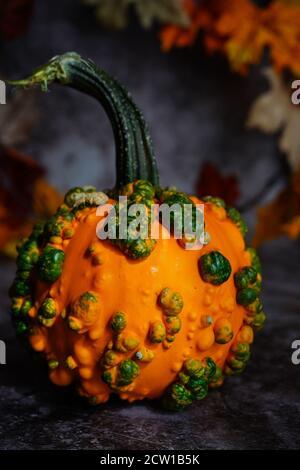 Knucklehead Kürbisse im Herbst Herbst Hintergrund, selektiver Fokus - Stockfoto