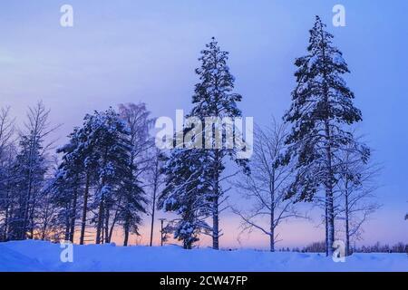 Orangefarbener Sonnenuntergang im Winter Nadelwald. Schneebedeckte Fichten und Pinien. Schöne weihnachten Hintergrund. Stockfoto