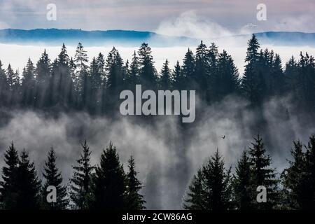 Wald im Morgennebel. Nebel durch Sonnenstrahlen geteilt.