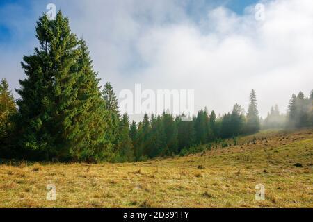 Kalter nebliger Morgen. moody Wetter Landschaft. Fichtenwald auf der Wiese im Herbst. Naturmagic Konzept