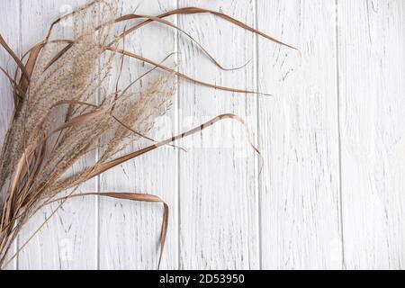 Hintergrund für ein Banner mit trockenen Blumen auf einem hellen Holzhintergrund. Herbst und Winter Gruß Hintergrund. Getrocknete Blumen mit einem Platz für einen Inscri - Stockfoto