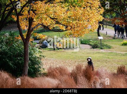 Seoul, Südkorea. Oktober 2020. Eine Frau macht einen Spaziergang im Olympiapark in Seoul, Südkorea, 15. Oktober 2020. Südkorea hat am Sonntag beschlossen, seine drei-Stufen-Leitlinien zur sozialen Distanzierung auf das niedrigste Niveau zu senken, da die täglichen COVID-19-Fälle in den letzten Tagen relativ niedrig blieben. Viele Bewohner kommen in den Parks für Outdoor-Aktivitäten in der Herbstsaison. Quelle: Wang Jingqiang/Xinhua/Alamy Live News Stockfoto