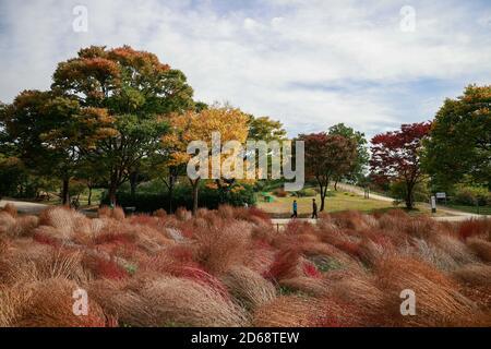 Seoul, Südkorea. Oktober 2020. Menschen machen einen Spaziergang im Olympiapark in Seoul, Südkorea, 15. Oktober 2020. Südkorea hat am Sonntag beschlossen, seine drei-Stufen-Leitlinien zur sozialen Distanzierung auf das niedrigste Niveau zu senken, da die täglichen COVID-19-Fälle in den letzten Tagen relativ niedrig blieben. Viele Bewohner kommen in den Parks für Outdoor-Aktivitäten in der Herbstsaison. Quelle: Wang Jingqiang/Xinhua/Alamy Live News Stockfoto