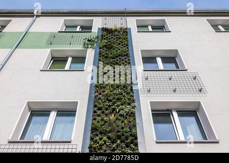 Essen, Ruhrgebiet, Nordrhein-Westfalen, Deutschland - wandgebundene Fassadenbegrünung an frisch reorganisierten Häusern der Allbau Wohnungsbaugesellschaft AT