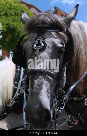 Nahaufnahme eines Pferdes aus der Umgebung von Wilmington, NC - Stockfoto
