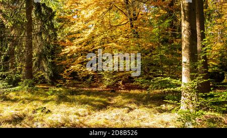 Waldfarbe im Herbst