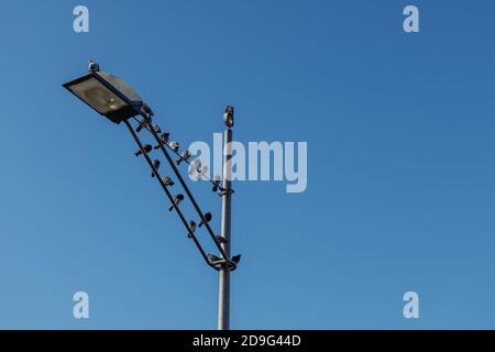 Gruppe von kleinen Tauben Vogel auf der Straße Lampe gegen blauen Himmel.