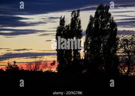 Baumsilhouetten bei Sonnenuntergang. Silhouetten von Bäumen bei Sonnenuntergang. Baumsilhouetten während der goldenen Stunde.