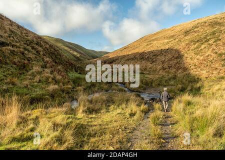 Frau zu Fuß mit Hund überqueren Hoaroak Wasser am Fuße der Long Chains Combe an einem sonnigen Herbsttag, Exmoor Nationalpark