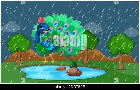 der pfau tanzt in einem Park bei Regen Stockfoto