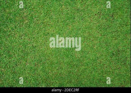 Green Grass Textur Hintergrund Draufsicht der hellen Rasen Garten, , Rasen für das Training Fußballplatz, Grass Golfplätze grünen Rasen Muster strukturiert Bac