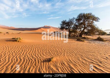 Die landschaftlich schönen Sossusvlei und Deadvlei, Ton und Salzpfanne mit geflochtenen Akazienbäumen, umgeben von majestätischen Sanddünen. Namib Naukluft National Park, Hauptbesucherattraktion und Reiseziel in Namibia.