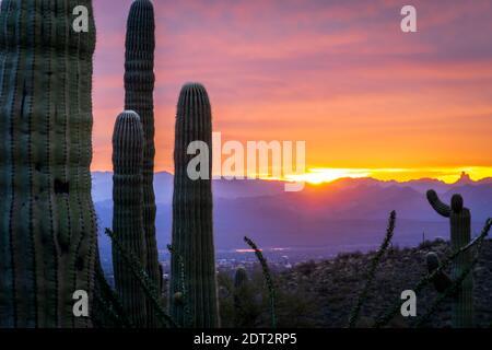 Saguaro Kaktus Pflanzen Gegen Den Himmel Bei Sonnenuntergang