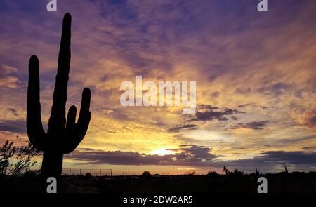 Silhouette Saguaro Kaktus Gegen Den Himmel Bei Sonnenuntergang