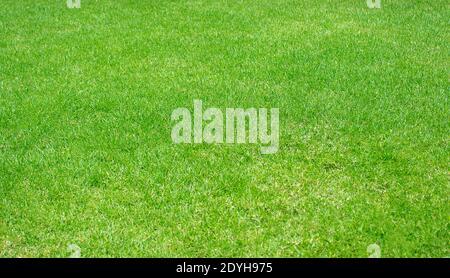 Grün Rasen Muster texturierten Hintergrund, frisch grün gepflegten Rasen Nahaufnahme