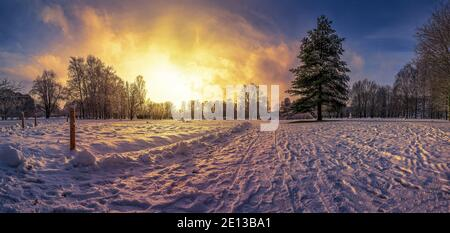 Panoramablick auf den Sonnenuntergang über im Schneepark mit bedeckt Große Tanne im Winter Stockfoto