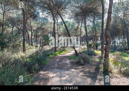 Pfad in der Mitte des Waldes. Schönes Hotel, mit viel Natur gehen, sehr grün und Jungfrau Vegetation. Trekking Route in Huelva Berge