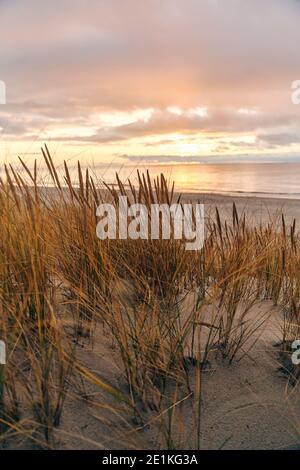 Hohe Dünen mit Dünengras und einem breiten Strand darunter