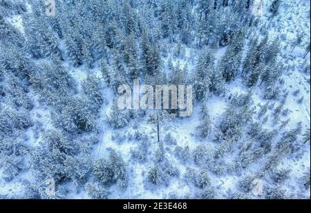 Landschaftlich schöne Luftaufnahme auf schneebedeckten Kiefernwald bei Schneefall, weiß Winter Landschaft in Nordschweden, Umea Stockfoto