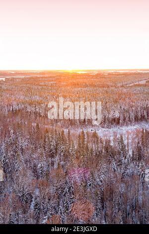 Schneebedeckte Winterwaldansicht von Drohne bei Sonnenaufgang Stockfoto