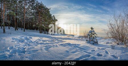 Panoramablick auf die Winterlandschaft. Bedeckt mit Schneebäumen gegen dramatisches Abendlicht. Verschneite Ostseeküste.