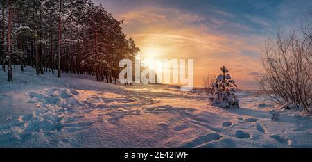 Panoramablick auf Sonnenuntergang über Winterlandschaft mit in Pinien und Tannen bedeckten Bäumen gegen dramatische Abendlicht. Verschneite Ostseeküste.