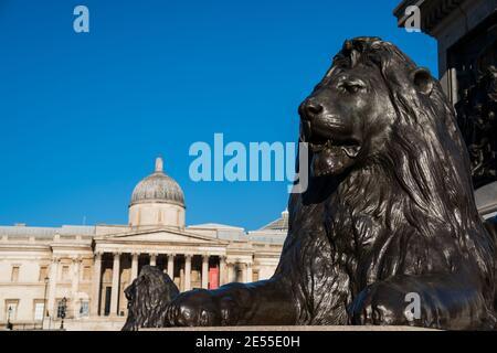 Löwenskulptur vor der National Gallery am Trafalgar Square, London, Großbritannien