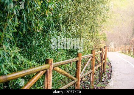 Ein Fußweg mit dichtem Bambusbusch, der mit Sonnenlicht beleuchtet ist