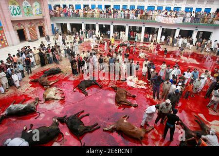 Muslime Schlachten Bullen während der Eid-al-Adha-Festival in Lahore 9. Dezember 2008. Pakistanische Muslime feiern Eid al-Adha um das Ende der Haj durch Schlachtung Schafe, Ziegen, Kamele und Kühe zum Propheten Abrahams Bereitschaft, seinen Sohn Ismail auf Gottes Befehl Opfern zu gedenken.  REUTERS/Mohsin Raza (PAKISTAN)