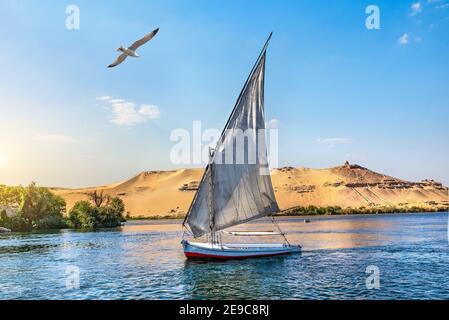 Möwe über Segelboot auf dem Nil in Assuan bei Sonnenuntergang, Ägypten. Stockfoto