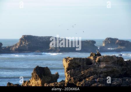 Zwei Vögel sitzen auf einem Felsen in der Nähe des Ozeans Stockfoto