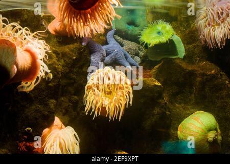 Nahaufnahme einer Seeanemone unter Wasser
