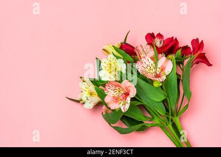 Strauß Alstroemeria Blumen isoliert auf rosa Hintergrund Draufsicht Flat Lay Floral Weihnachtskarte 8 März, Happy Valentine's day, Muttertag, Frühling