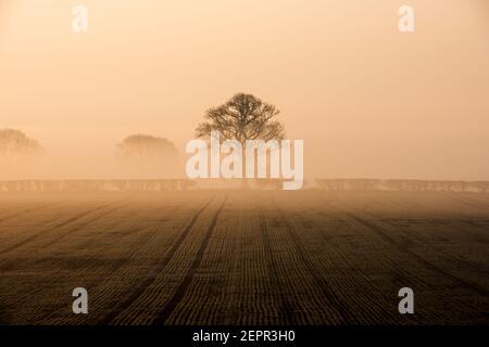 Bingham, Nottinghamshire, Großbritannien. Februar 2021, 28th. Ein Baum taucht aus einer Nebelschicht auf, als die Sonne über Bingham, Nottinghamshire, aufgeht. Neil Squires/Alamy Live News