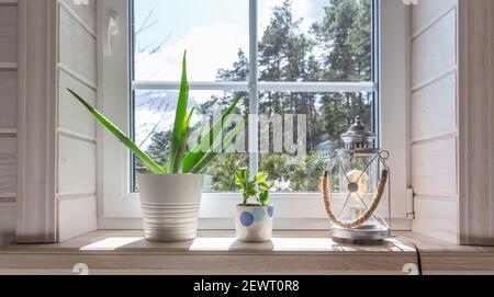 Gruppe von Zimmerpflanzen auf weißem Holzfenster in einem Zimmer im skandinavischen Stil. Wohndekoration Lifestyle