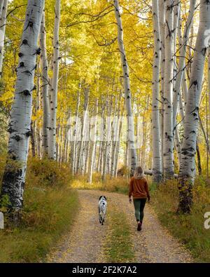 Rückansicht einer Frau, die mit Hund zwischen Herbstbäumen spazierengeht Im Wald während des Urlaubs