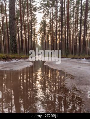Im Pinienwald ist die Straße mit Eis bedeckt Die unter dem Einfluss der Frühlingssonne allmählich schmilzt Und Wasserpfützen bilden sich auf der Straße